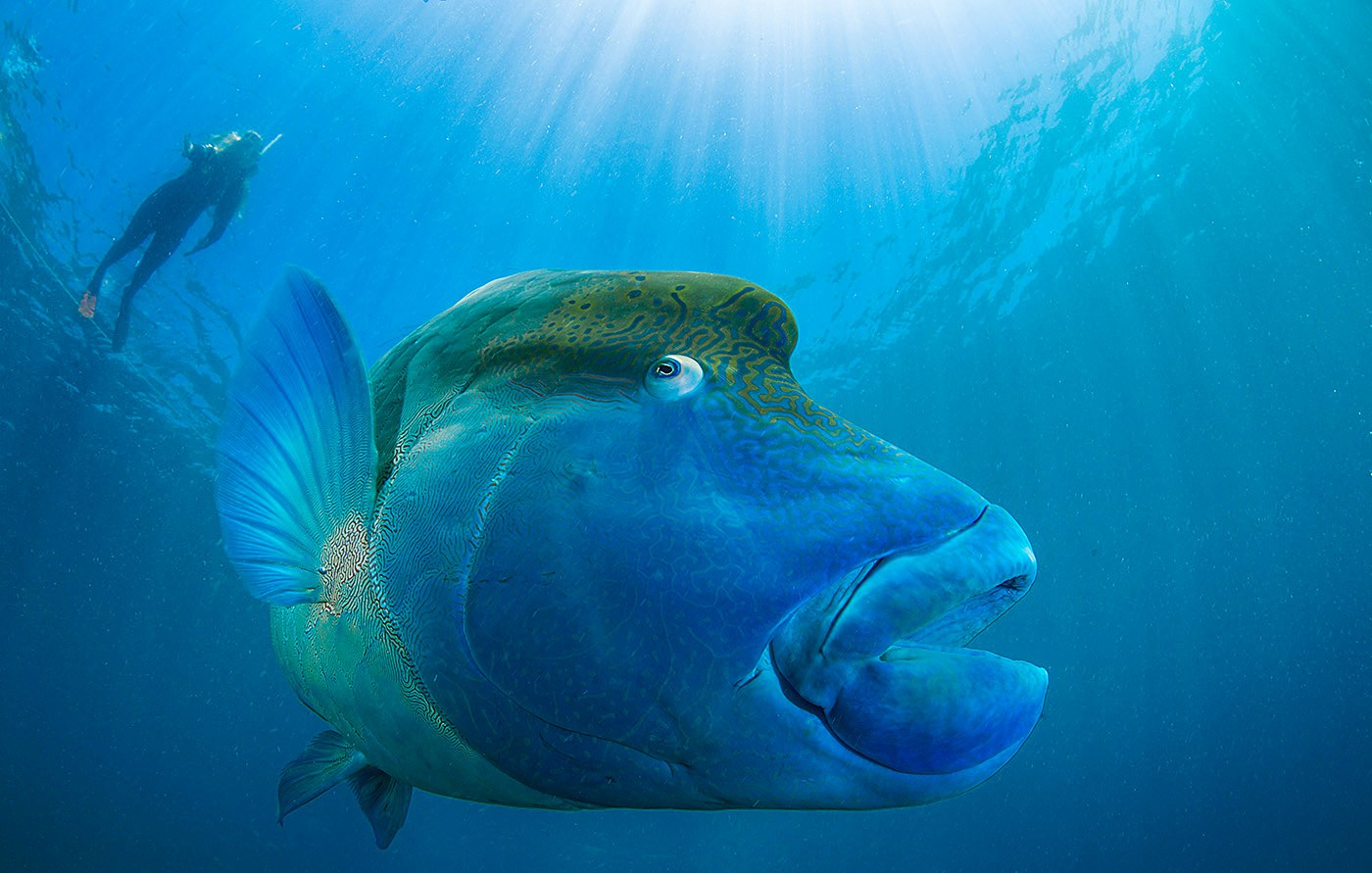Indo-Pacific Fish Conference